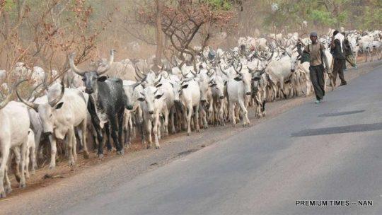 Herdsmen-1024x576